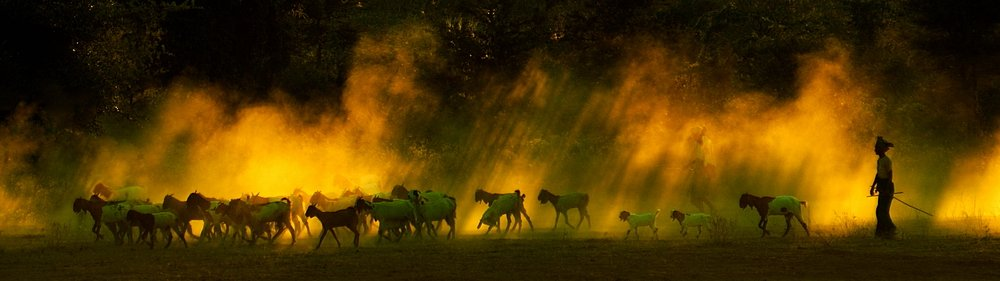 бирма,баган,стадо,пастухи, fotomafia