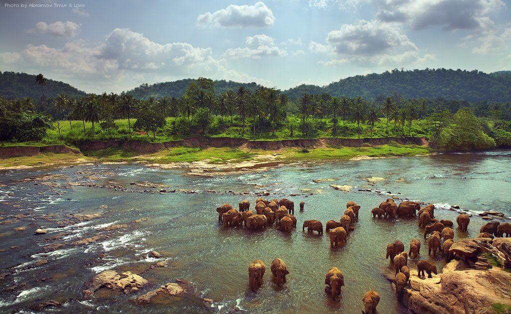река, тропики, слоны, шри-ланка, цейлон, Лора
