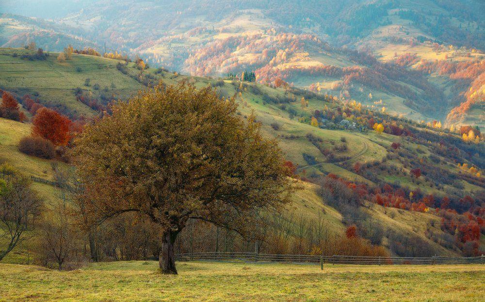 карпаты, осень, горы, яблоня, Андрей Радюк