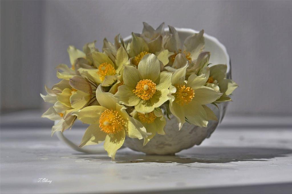 цветы, Татьяна Образ