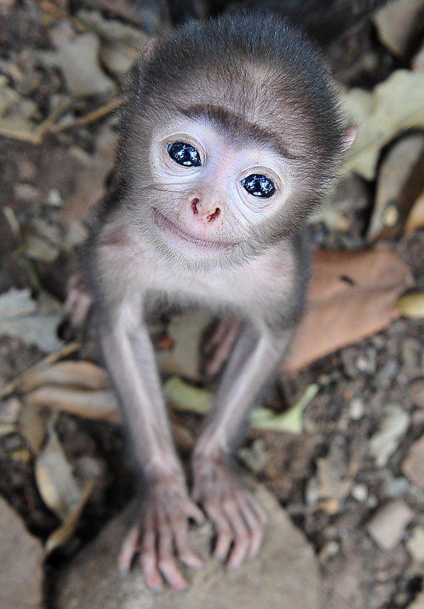 животные, обезьяна, обезьяны, индия, путешествия, фотоохота, Сотсков Николай