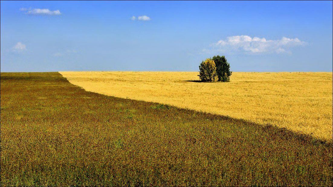 рязанщина, лето, поле, парочка, Тарасов Алексей