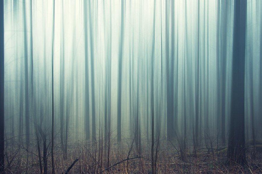 россия, пейзаж, лес, туман, трава, дерево, утро, dyadyavasya, Дмитрий dyadyavasya  Шамин
