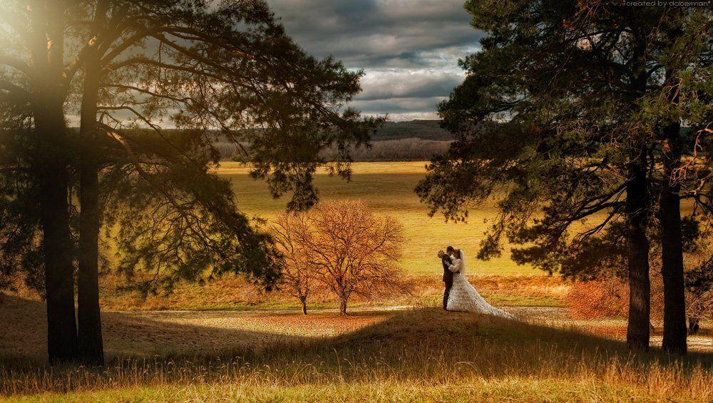 wedding, bride, forest, свадьба, лес, молодожены, сосны, doberman
