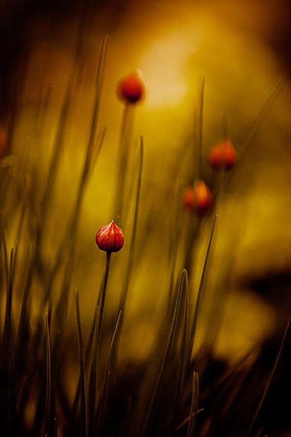 природа,весна, Мария