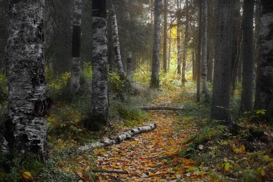 осень, Илья Михайлович