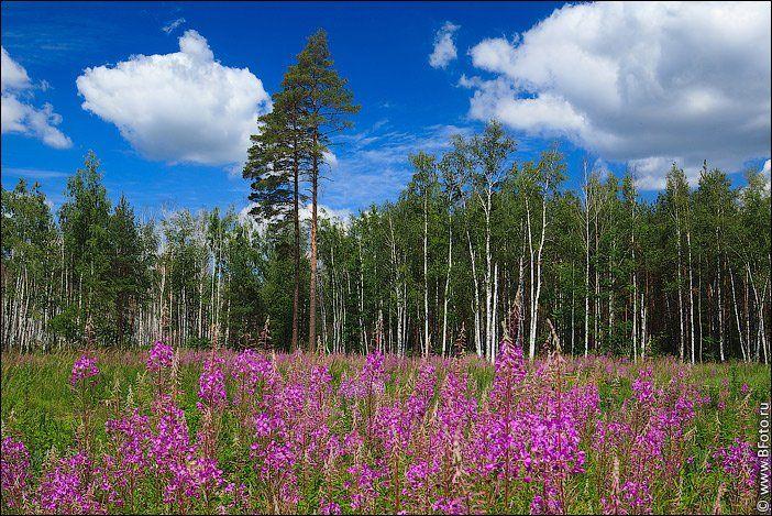 липецкая область, лето, пейзаж, июнь, 2012, фотограф Алексей Строганов www.BFoto.ru