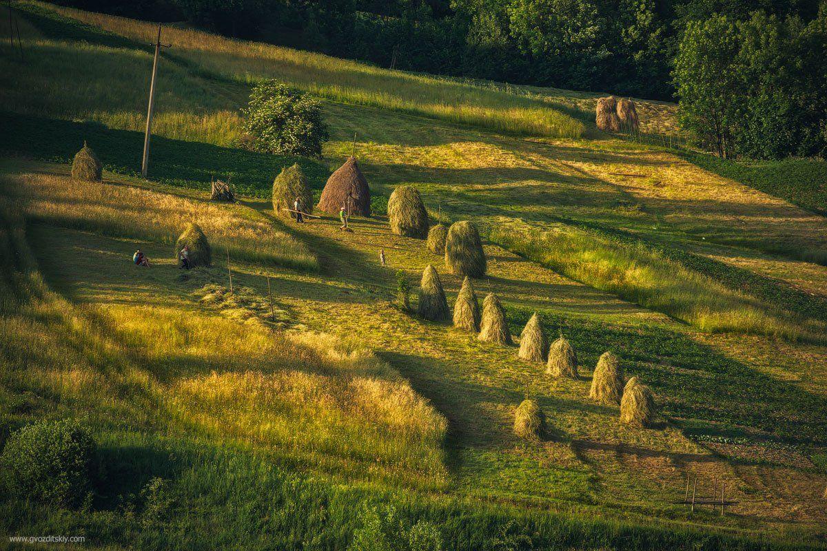 карпаты, пастораль, гуцулы, трава, сено, сенокос, скирды, Гвоздицкий Алексей