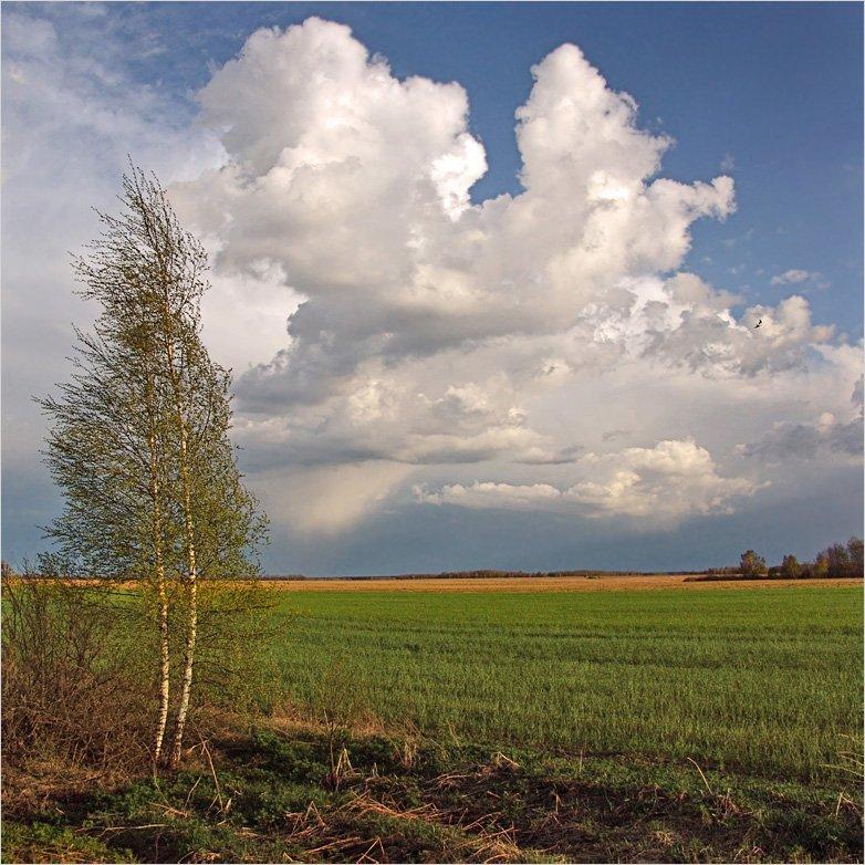 весна, рязанщина, Тарасов Алексей