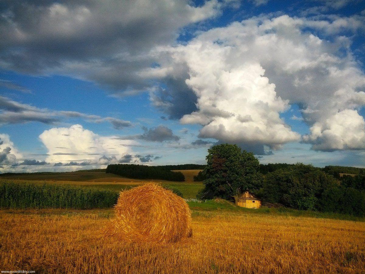 август, поля, урожай, осень, Гвоздицкий Алексей