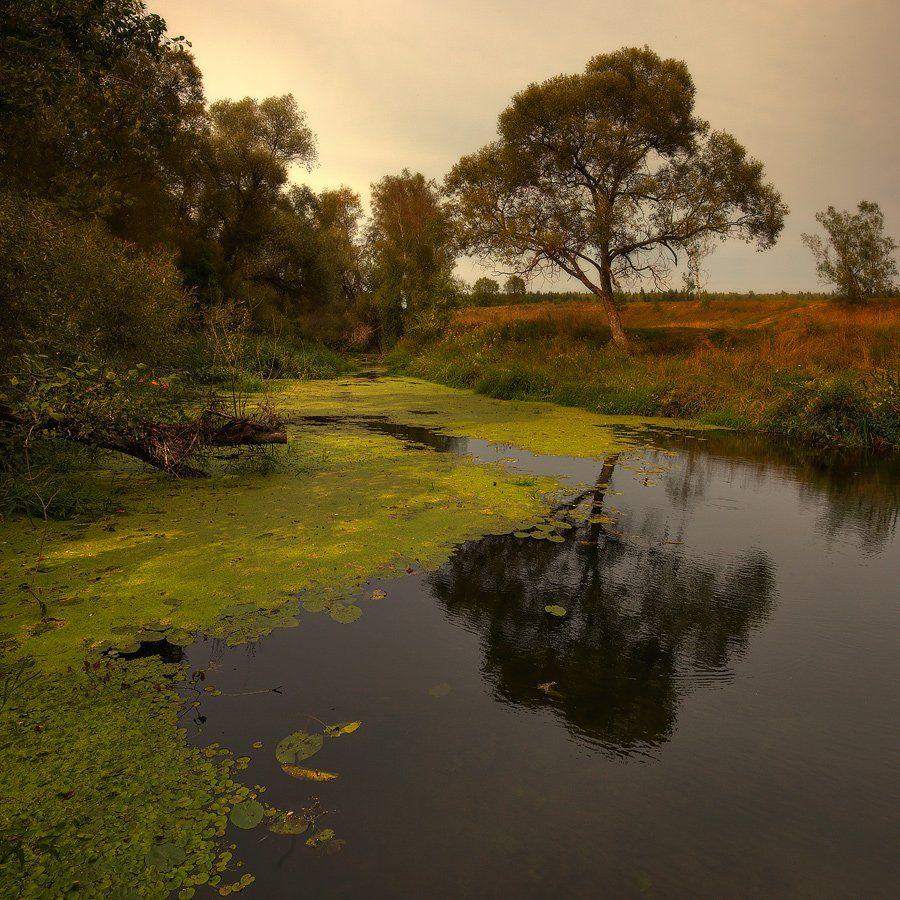 пейзаж, пруд, дерево, Oleg Dmitriev
