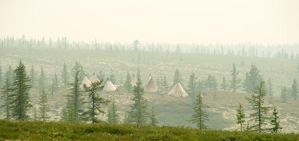 север, путешествия, стойбище, жизнь на краю земли, чумы, den-sau-pin
