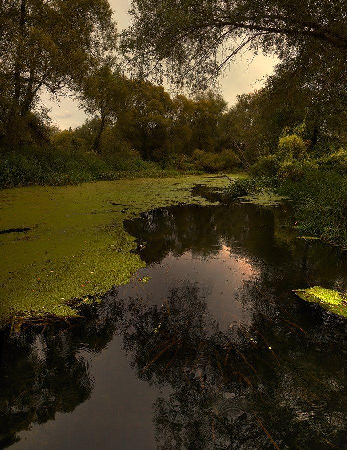пруд, лето, пейзаж, Oleg Dmitriev