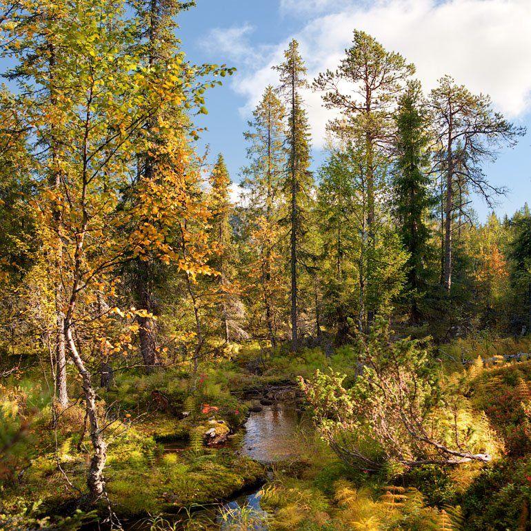 лесной, ручей, Владимир Кириченко (vlkira)