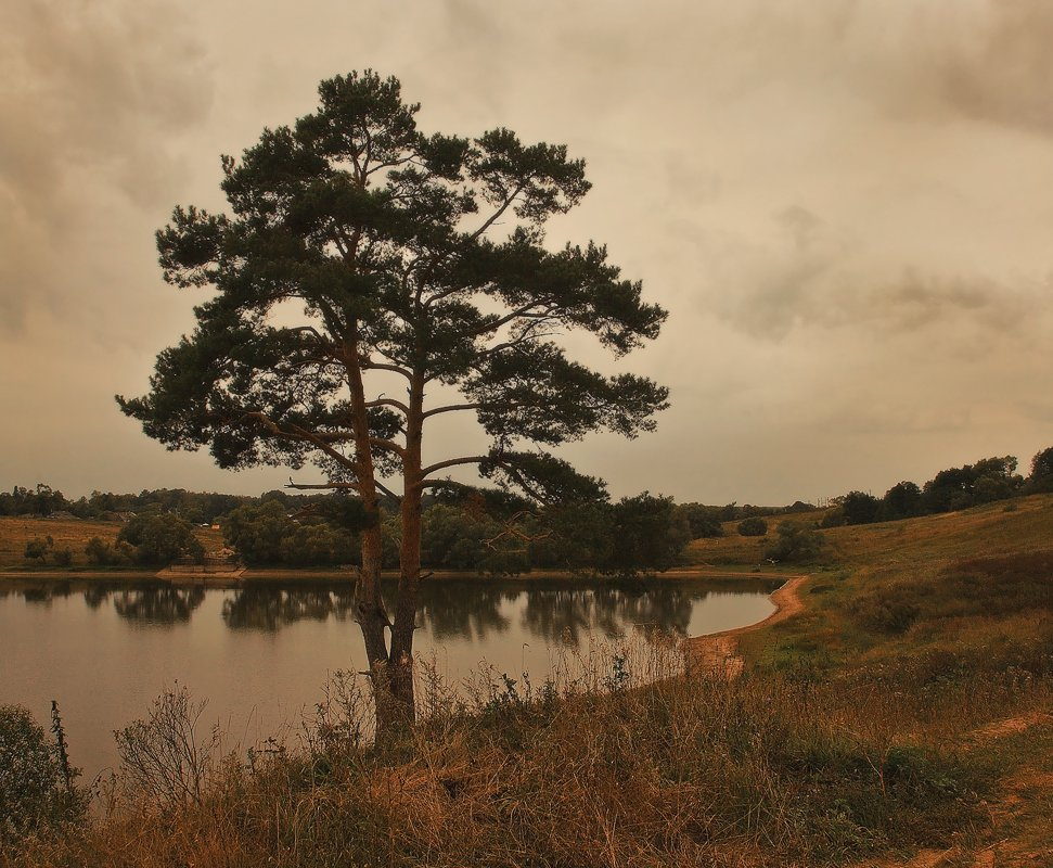 сосна, пейзаж, озеро, Oleg Dmitriev