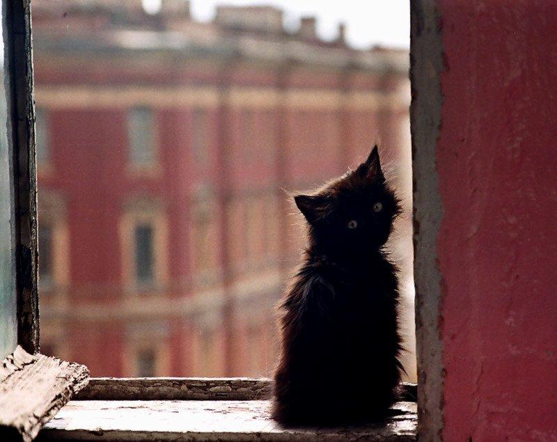 котенок, окно, подоконник, окно, надежда, ожидание, одиночество., Смолянская Евгения