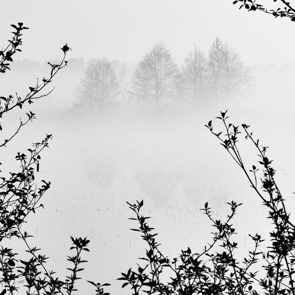 будущее, ветки, чб, туман, NO