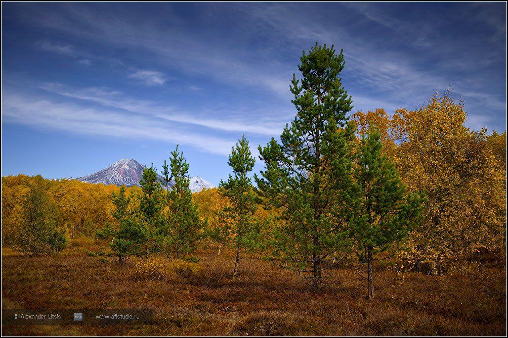 лес,осень,камчатка, Александр Лицис