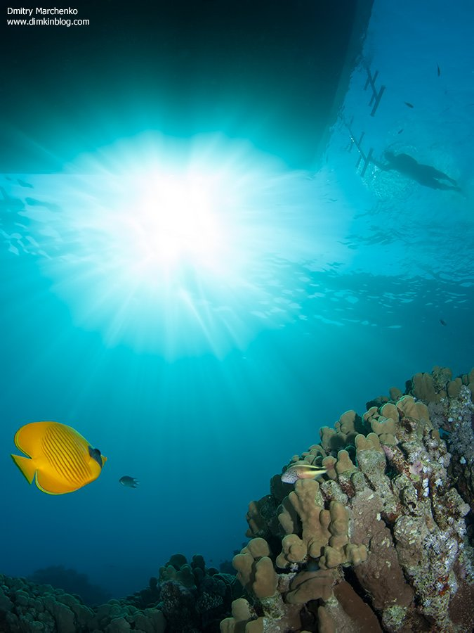 красное море,butterfly,рыба бабочка,underwater, Дмитрий