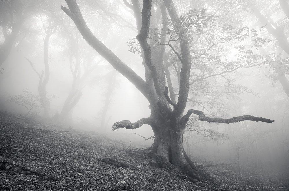 kovalenko, крым, пейзаж, туман, дерево, ч/б, Юрий Коваленко