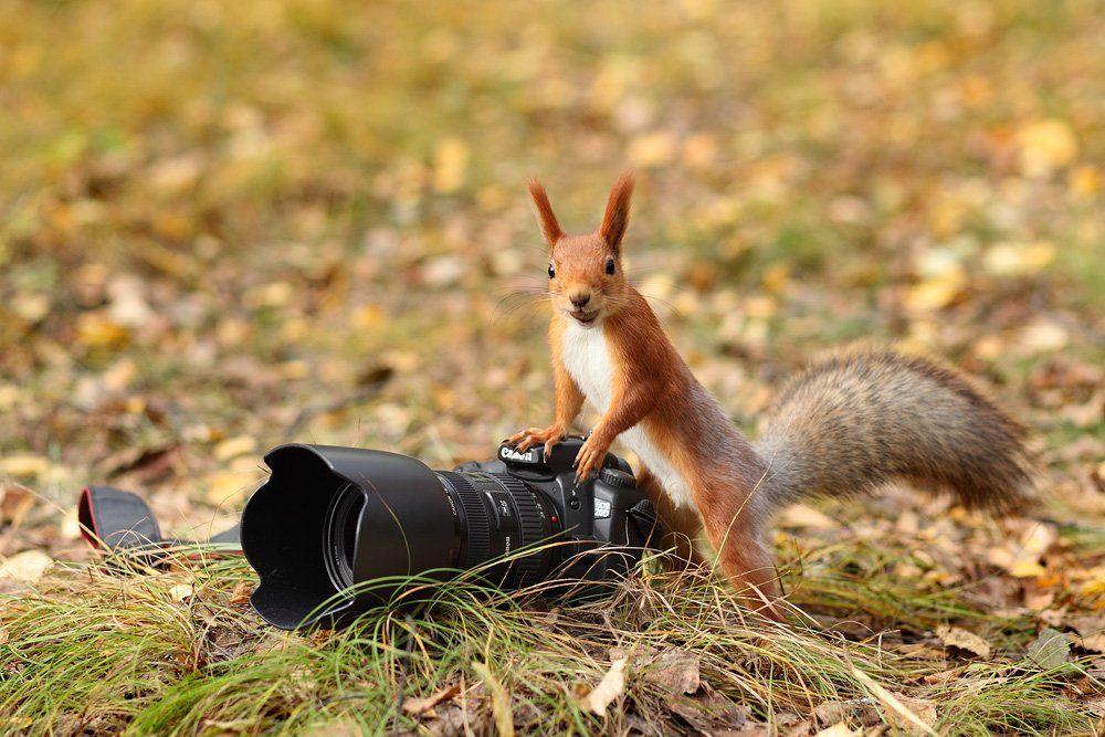 белка, фотоаппарат, осень, лес, юмор, Sokolova Tatiana