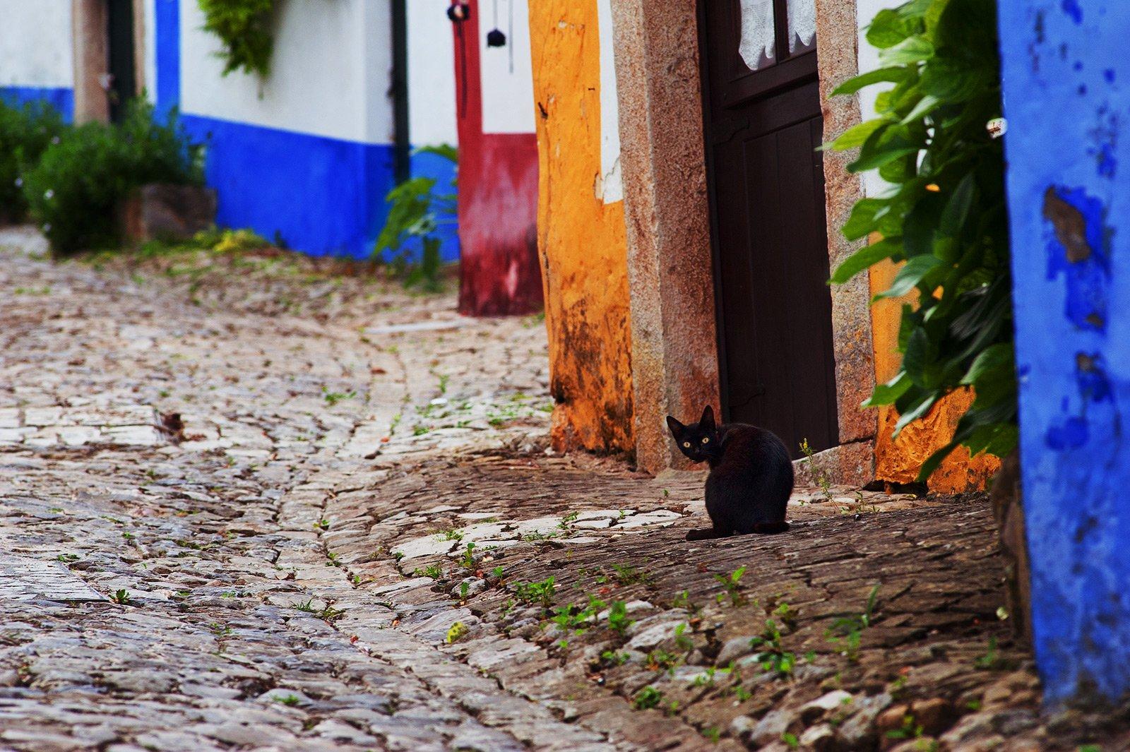 portugal, obidos, cat, color, walls, Сергей Кузнецов