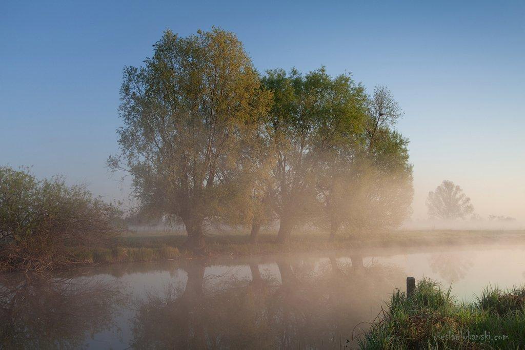 willows, morning, lubanski, ciudat