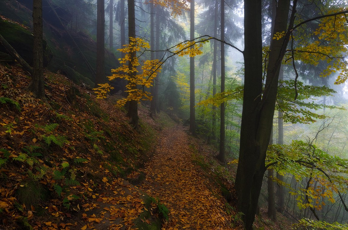 лес,пейзаж,саксония,национальный парк,осень, Дмитрий Бойко