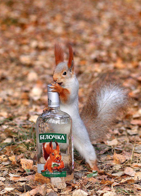 животные, белка, шутка, юмор, водка, Sokolova Tatiana