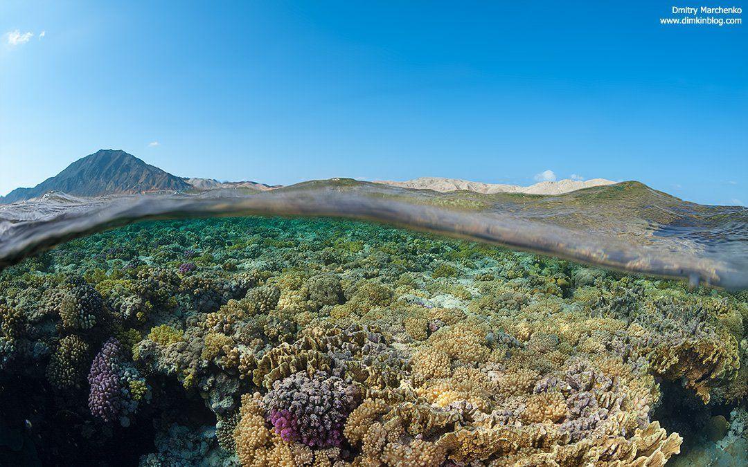 сплит,риф,underwater,split, Дмитрий
