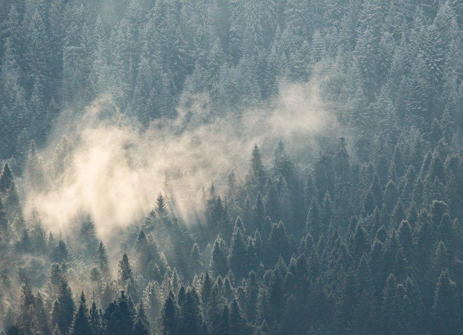 карпаты, осень, утро, туман, лес, Андрей Радюк