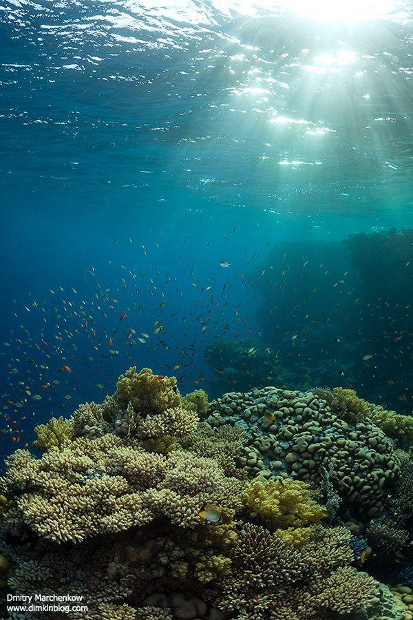 риф,underwater,reef, Дмитрий Марченко