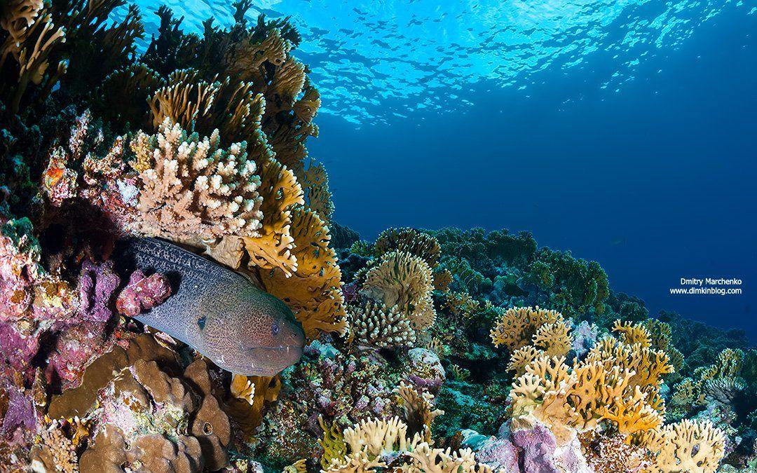 moray,мурена,underwater,fire coral, Дмитрий Марченко