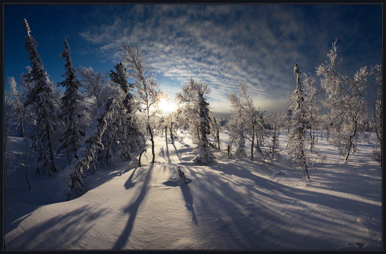 шория, шерегеш, лес, елки, снег, зима, солнце, иней, ярославский, виталий, Виталий из Н-ска