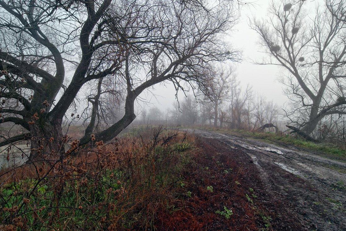 осень, туман, дорога, деревья, sa56