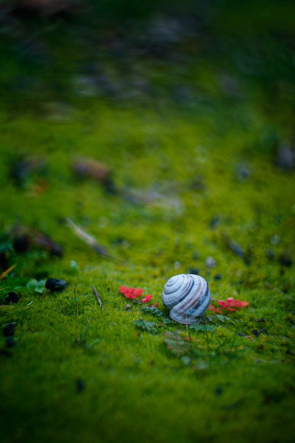 snail, shell, grass, green, leaves, Александра Александрова