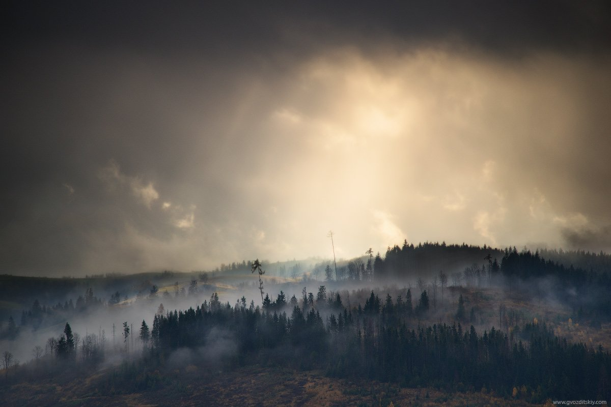 карпаты, осень, небо, лес, лучи, туман, Гвоздицкий Алексей