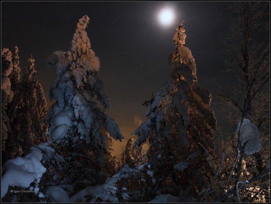 бурятия, тайга, лес, деревья, снег, ночь, зима, Igor Glushko