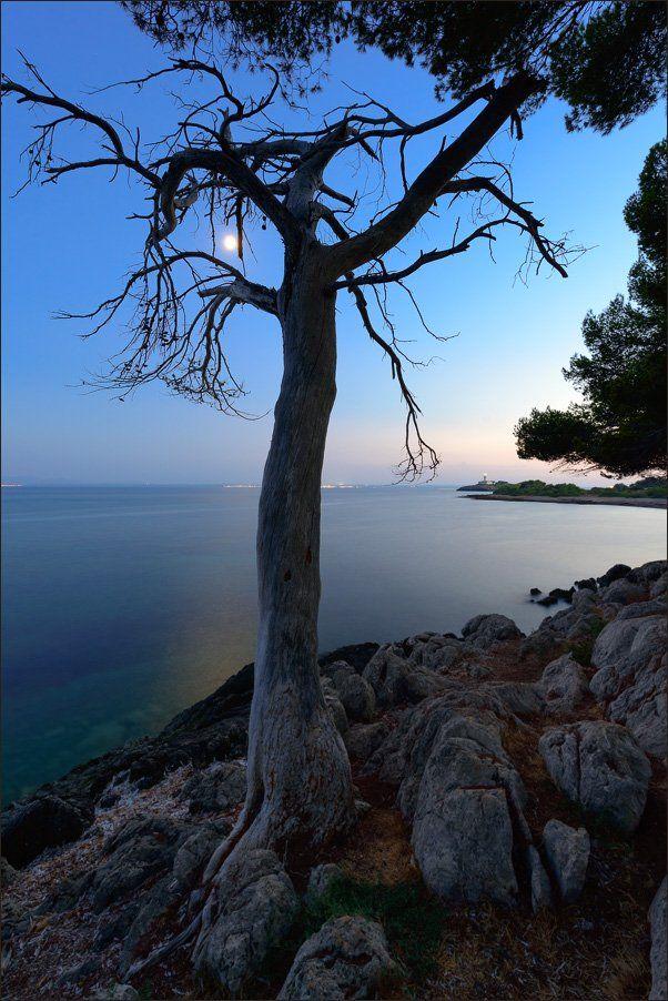ночь, море, луна, дерево, майорка, испания, Александр Константинов
