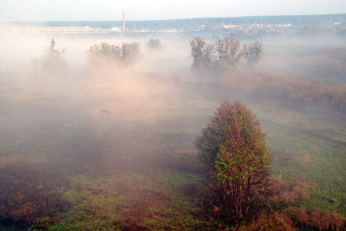итк строгого режима , лошадь, туман , утро ., sa56