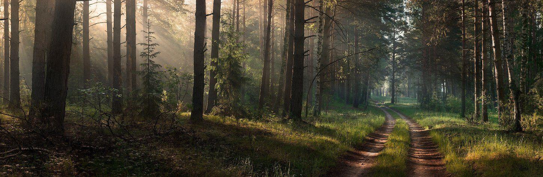 природа, пейзаж, лес, свет, дорога, серково, вязники, Дмитрий
