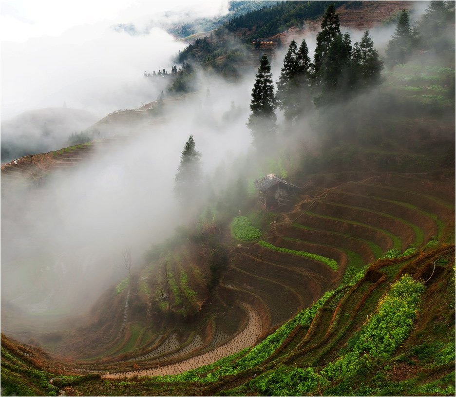 рисовые террасы лунцзи ,на территории деревни пинсян,китай, trinitrotoluol