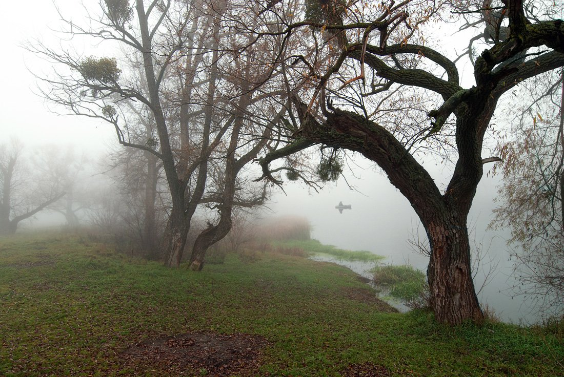 осень, туман, рыбак, утро., sa56