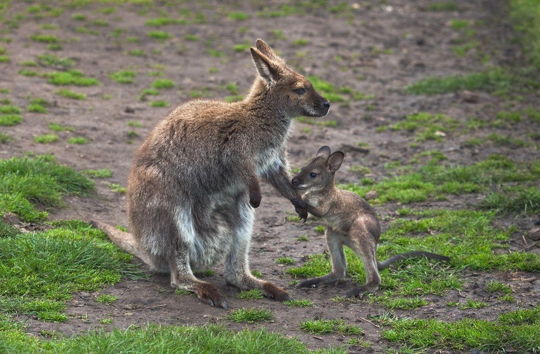 3. Обитают в основном в зарослях кустарников и в лесах, но могут встречаться и на открытых пространствах, в степях.