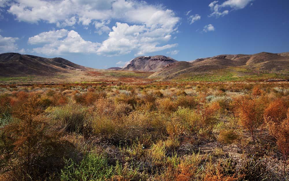Вот такая степь осенью, всё разноцветное.