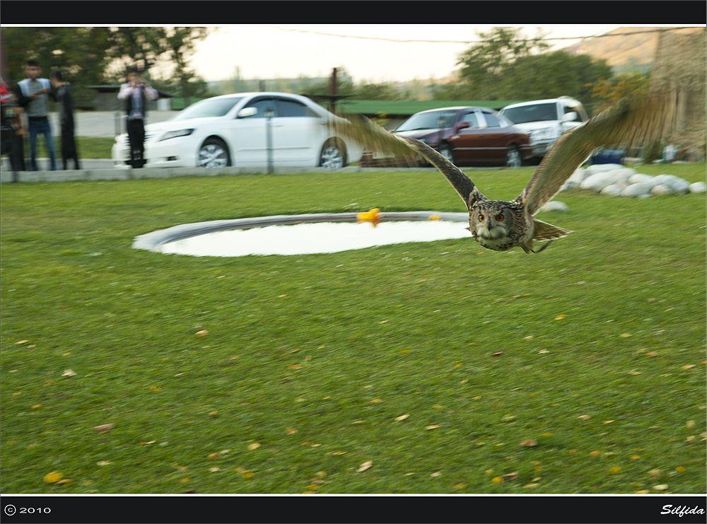 Для филина характерны глубокие и размеренные взмахи широких крыльев. Как правило, филин неторопливо летает над землей, высматривая добычу, чередуя машущий полет с непродолжительным планированием. Филины, обитающие в горах и ущельях могут использовать восходящие потоки воздуха и подолгу парить, описывая круги в высоте, однако такой полет не является для него характерным. При необходимости филин способен лететь со скоростью достаточной для того, чтобы легко догнать ворону. Так же он обладает способностью развивать полную скорость практически мгновенно, с первого взмаха.