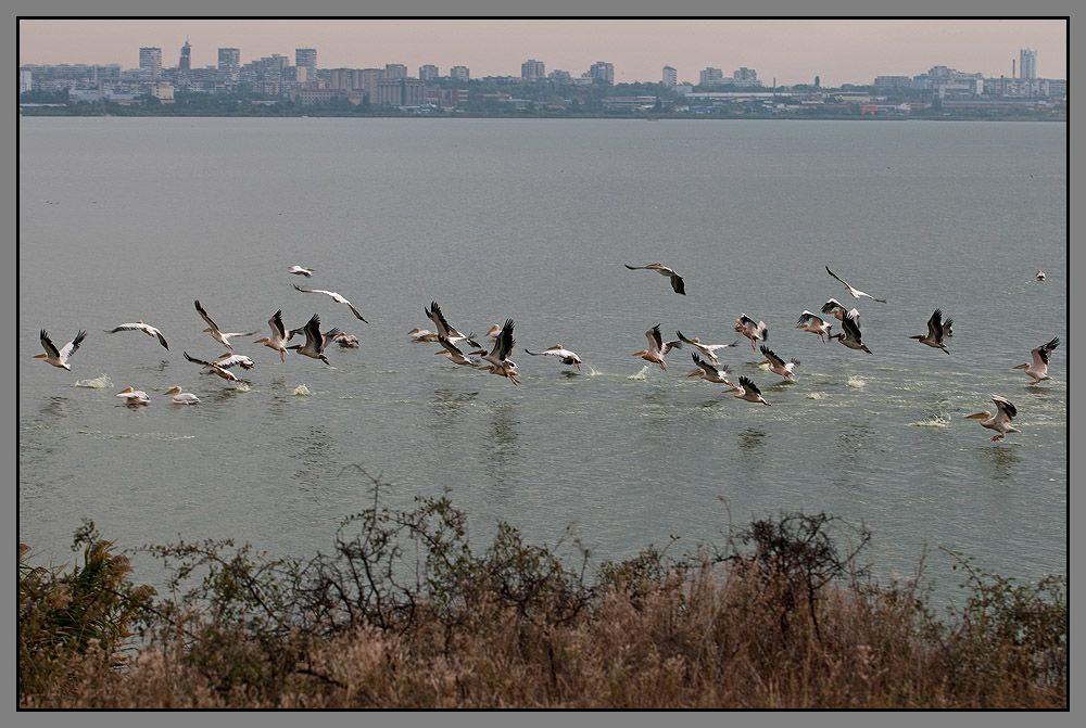Путь их пролегает над густонаселенными районами и с каждым годом все меньше мест, где птицы могут спокойно отдохнуть и подкормиться во время тяжелого и длинного перелета.