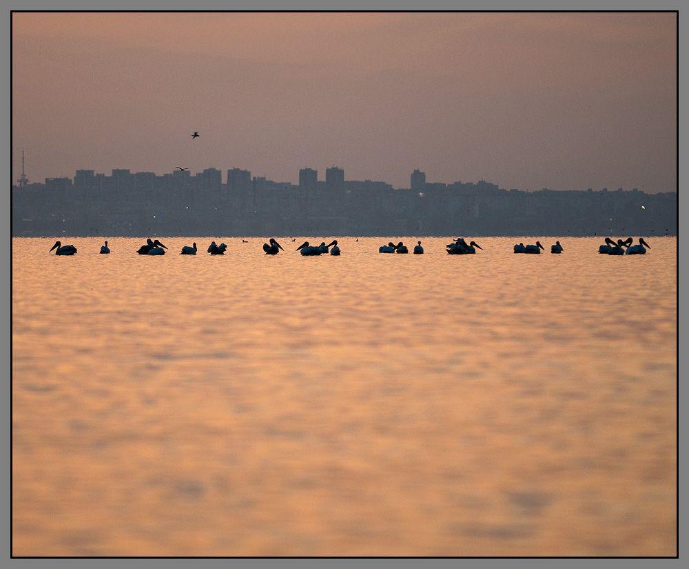 Помимо стай пеликанов (иногда по 2-3 тысячи особей), в этих местах можно наблюдать пролет гиганских журавлиных стай (до 15-30 тыс птиц) и орлов (3-5 тысяч)...