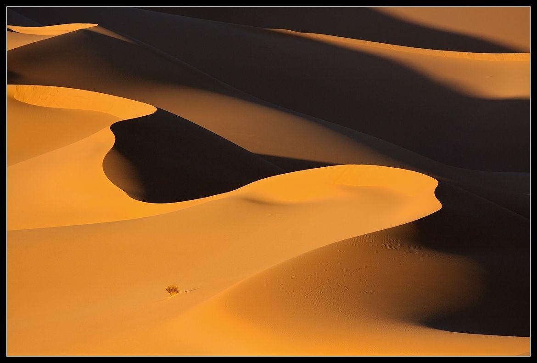 Свет и тени... Ветер и песок... Пустота и бесконечность.....