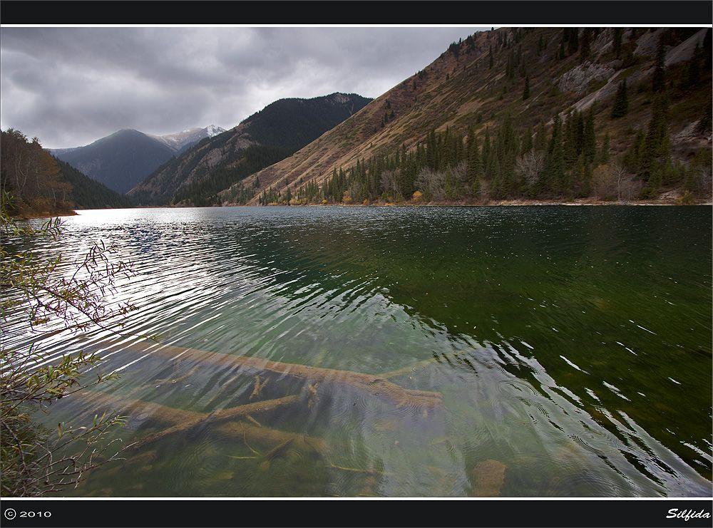 Утопленники. Вода в озере очень прозрачная поэтому хорошо видно лежащие на дне стволы елей, камни.